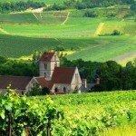 Vignoble en France